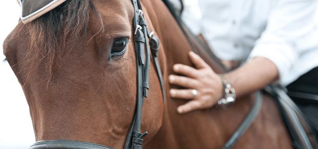 Osedlaný koník s jazdcom