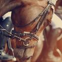 Osedlaný hnedý kôň