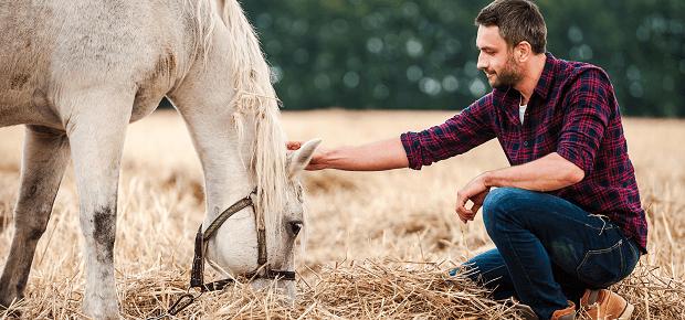 Kôň sa pasie na lúke
