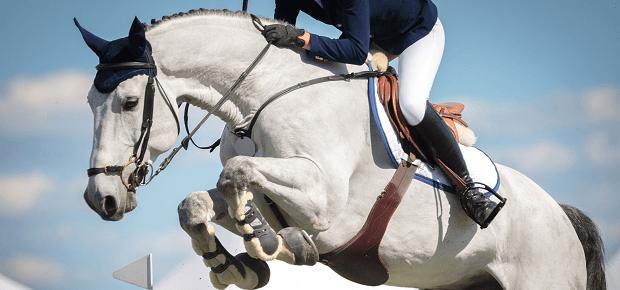 Kôň skáče cez prekážku