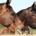 Starostlivosť o staré kone