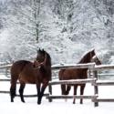 Kôň v ohrade cez zimu
