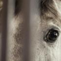 Pohľad koňa v stajni