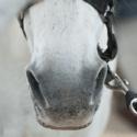 Nos koňa